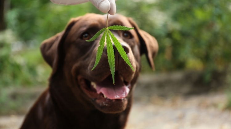 The Benefits Of Different Sort Of Cbd For Pets
